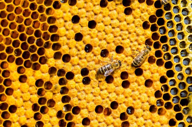 Feche acima da opinião as abelhas de trabalho fotografia de stock