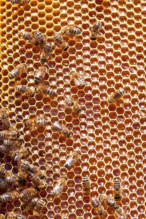Feche acima da opinião as abelhas de trabalho fotos de stock