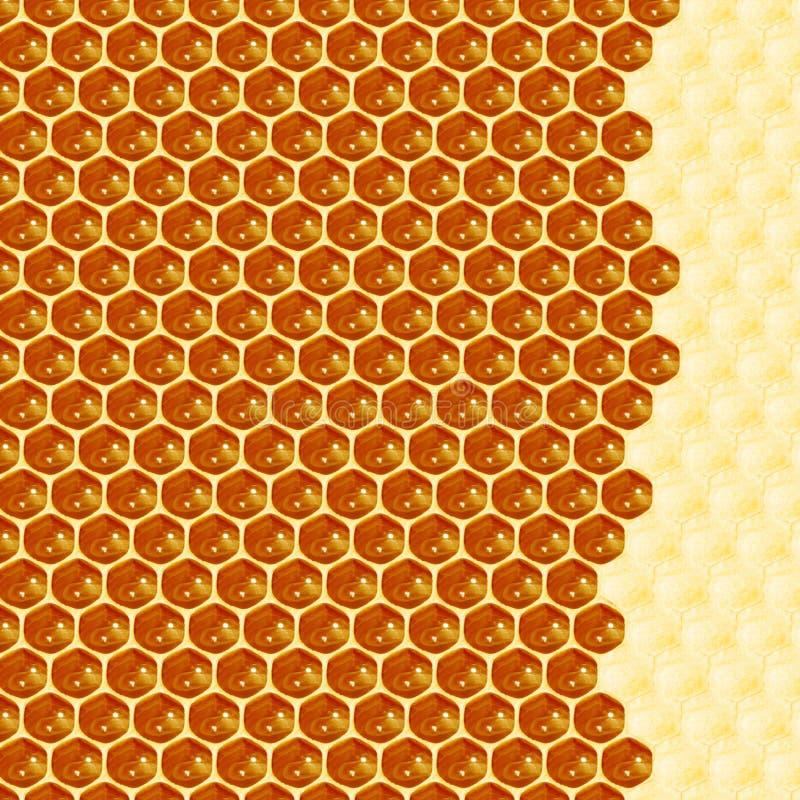 Feche acima da opinião as abelhas de trabalho em pilhas do mel imagem de stock royalty free