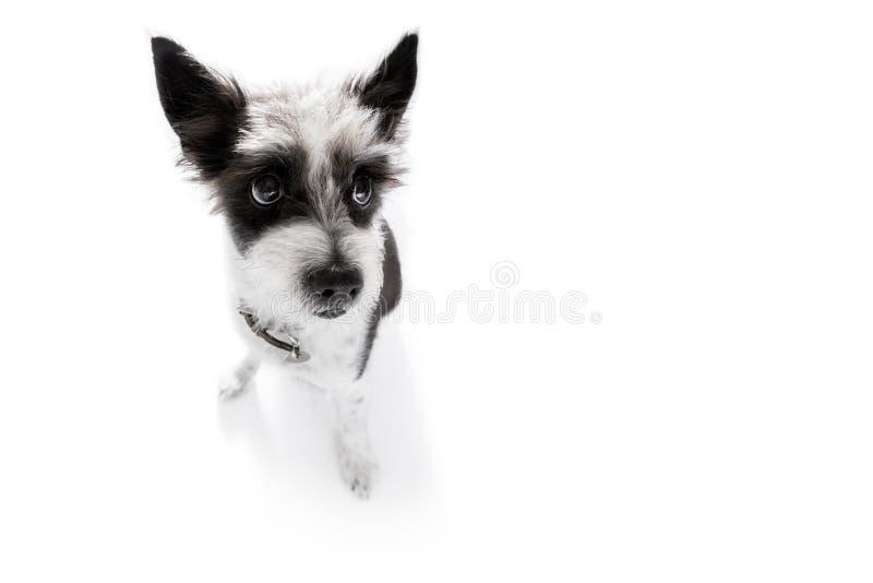 Feche acima da opinião curiosa do cão imagens de stock