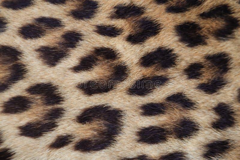 Feche acima da pele amarela do leopardo fotos de stock