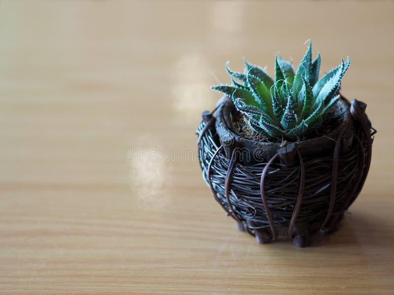 Feche acima da planta pequena na cesta de madeira, foco macio do cacto verde fotos de stock royalty free