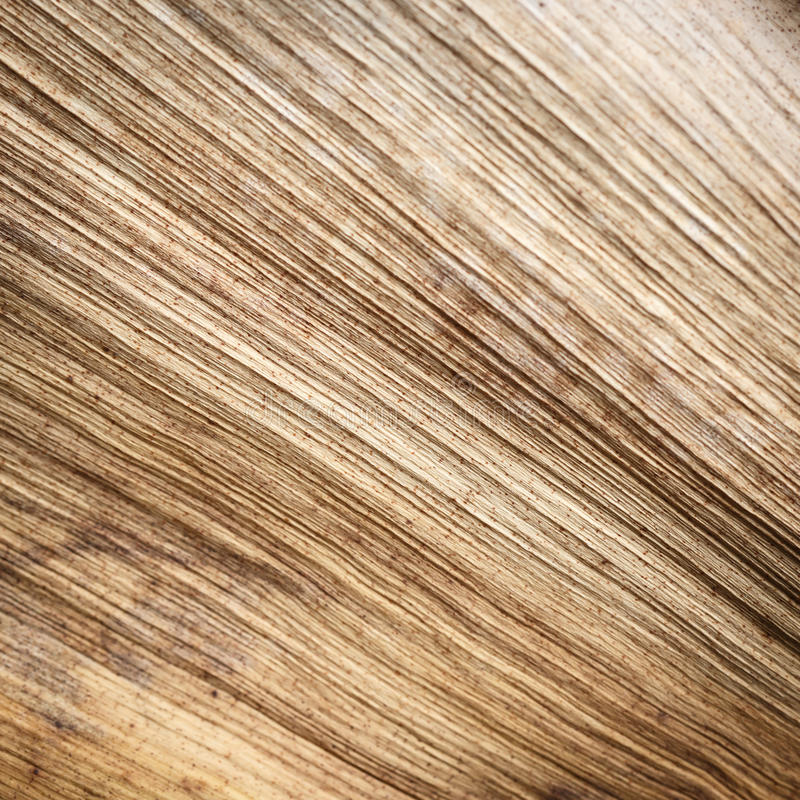 Feche acima da textura da folha de palmeira secada fotos de stock