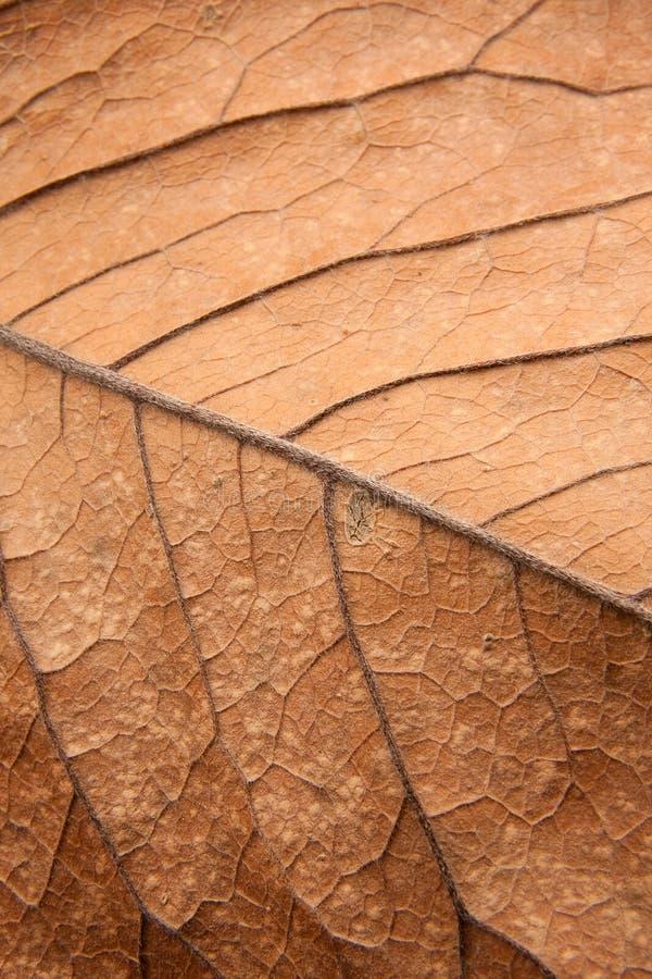 Feche acima da textura do fundo da folha marrom fotos de stock