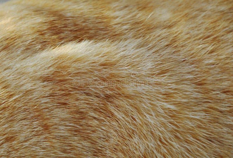 Feche acima da textura e do fundo alaranjados da pele do gato imagens de stock royalty free