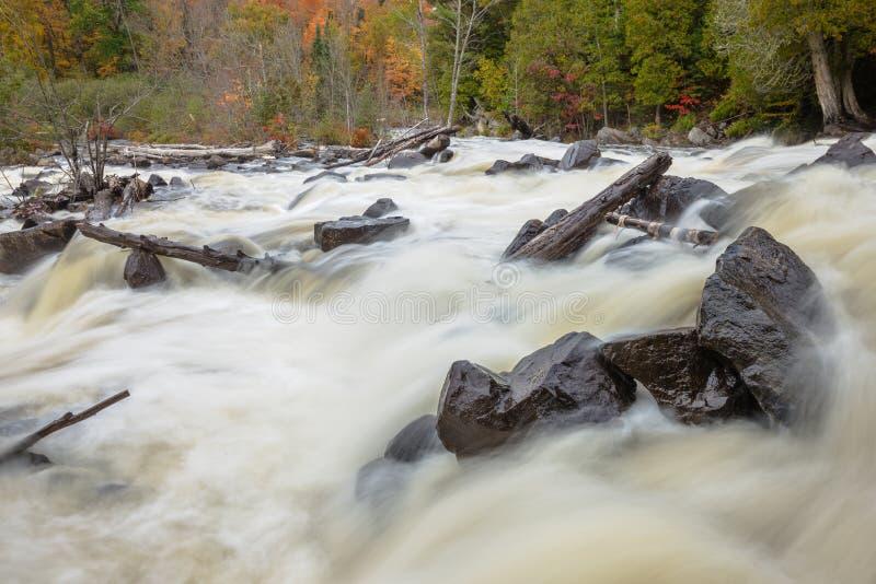 Feche acima da vista de rochas pretas e de árvores inoperantes em um rio fotografia de stock