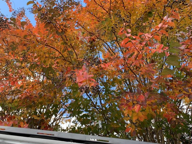 Feche acima das árvores verdes, amarelas, vermelhas e cor-de-rosa na queda fotos de stock