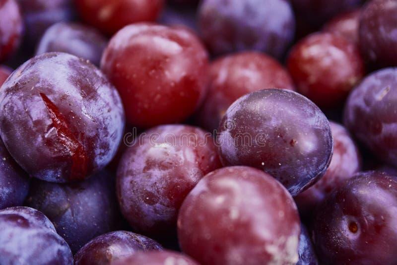 Feche acima das ameixas frescas Opinião superior das ameixas maduras frescas Agricultura, jardinando, conceito da colheita fotos de stock