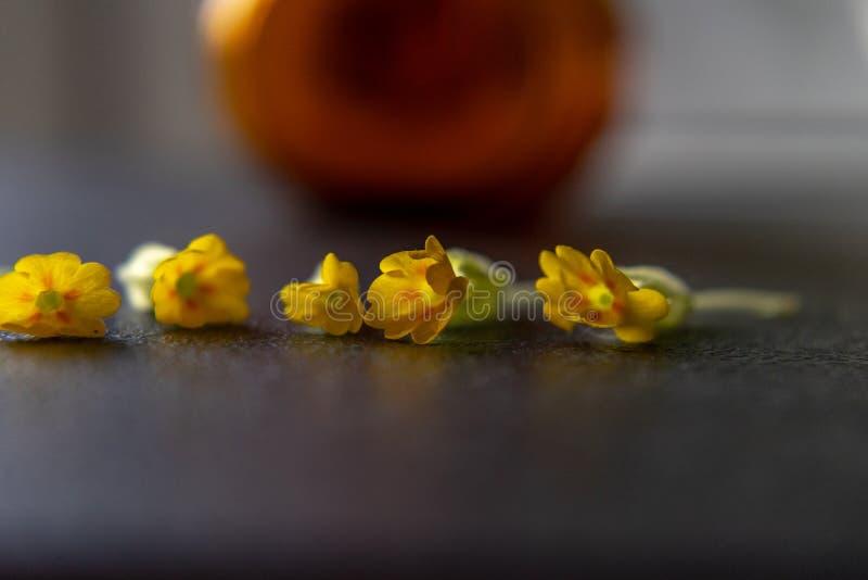 Feche acima das flores amarelas pequenas na superfície escura borrada e no fundo borrado imagem de stock