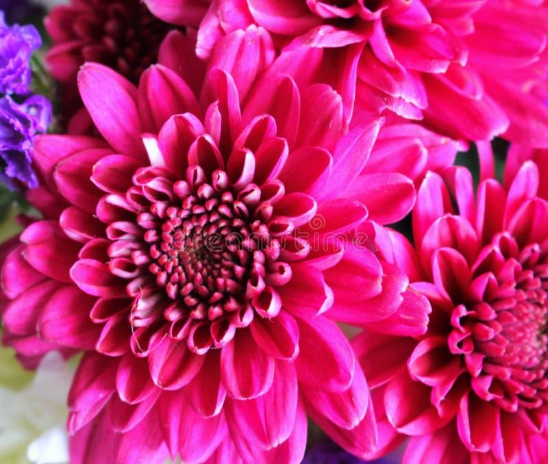 Feche acima das flores cor-de-rosa foto de stock royalty free