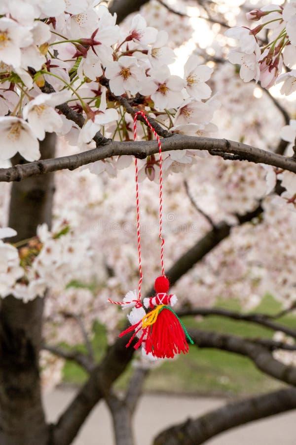 Feche acima das flores da ?rvore de sakura com o bozu japon?s do teru do teru da boneca da chuva fotos de stock