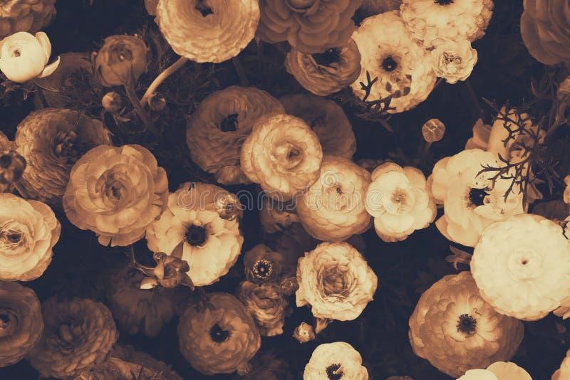 Feche acima das flores da mola Foto da vista superior foto do estilo do sepia imagens de stock royalty free