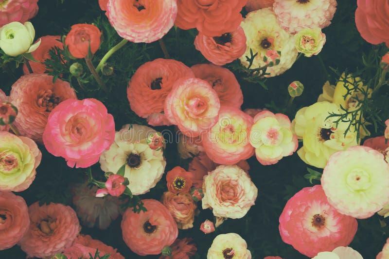 Feche acima das flores da mola vermelha Foto da vista superior imagens de stock