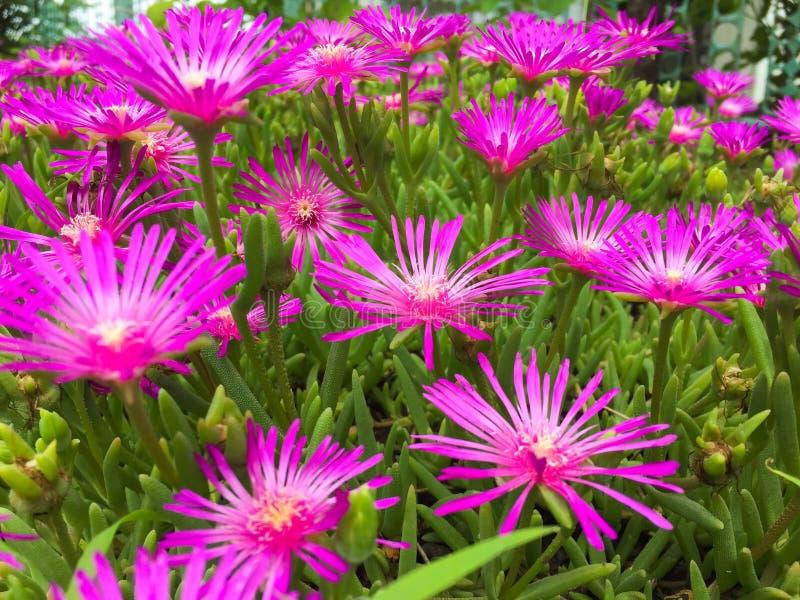 Feche acima das flores roxas foto de stock