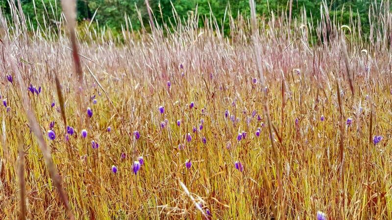 Feche acima das flores selvagens em um prado imagem de stock