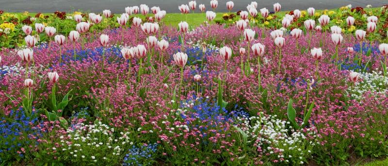Feche acima das flores imagens de stock royalty free