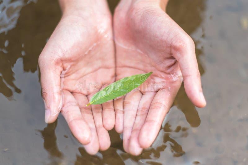 Feche acima das folhas do verde da posse da mão que flutuam na água de superfície no rio foto de stock