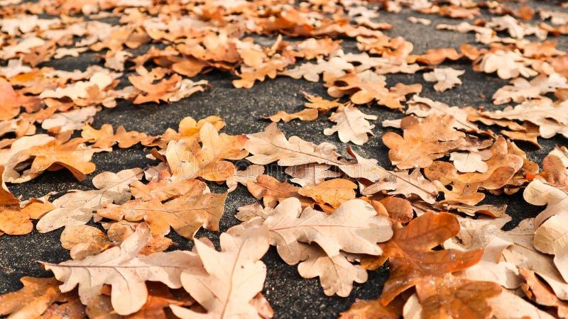 Feche acima das folhas na estrada fotos de stock royalty free