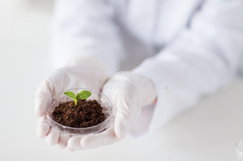 Feche acima das mãos do cientista com planta e solo imagens de stock royalty free