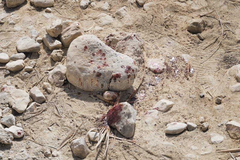 Feche acima das manchas do sangue fresco em chippings de pedra esmagados no deserto Assassinato com o uso da pedra Ataque com har fotografia de stock