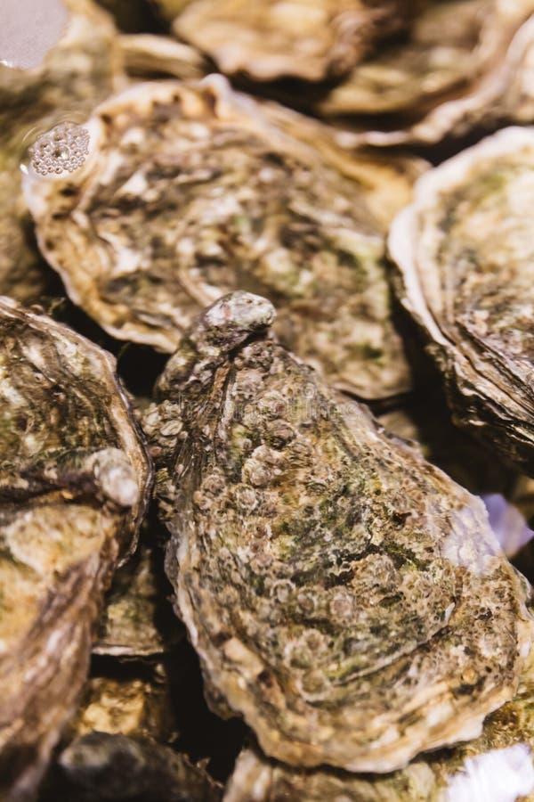 Feche acima das ostras vivas e frescas no escudo sob a água foto de stock