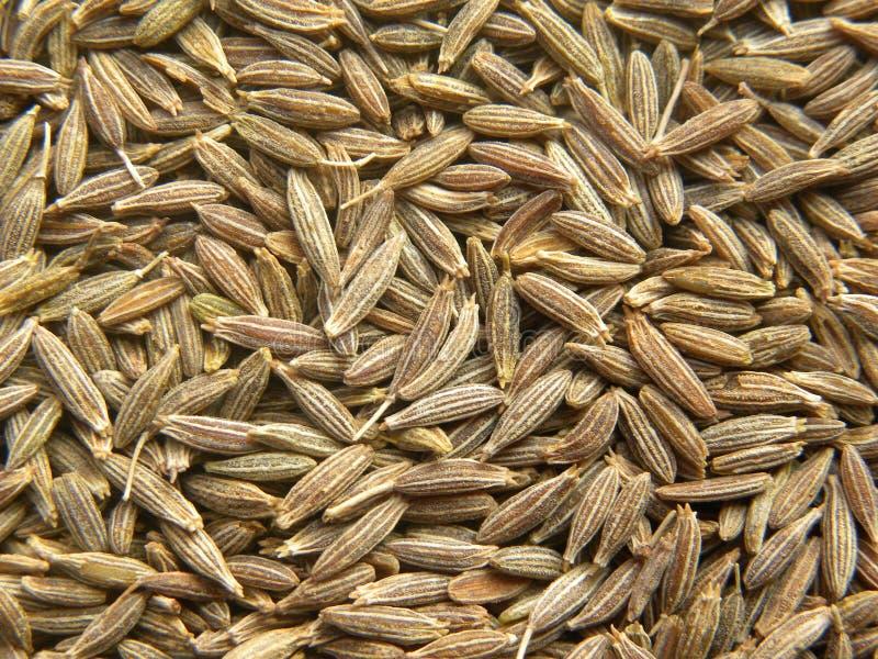 Feche acima das sementes de cominhos marrons imagem de stock