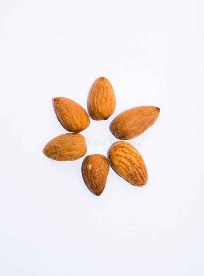 Feche acima das sementes marrons das amêndoas isoladas no fundo branco fotografia de stock