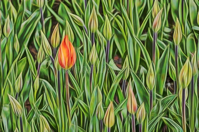 Feche acima das tulipas na natureza fotografia de stock royalty free