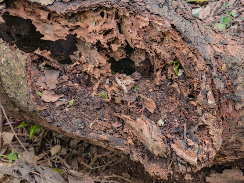 Feche acima de árvore quebrada na montanha fotografia de stock