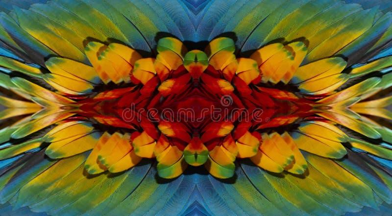 Feche acima de colorido da arara do pássaro do escarlate das penas do ` s imagem de stock