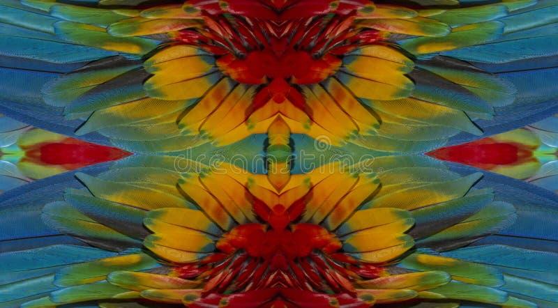 Feche acima de colorido da arara do pássaro do escarlate das penas do ` s fotos de stock royalty free