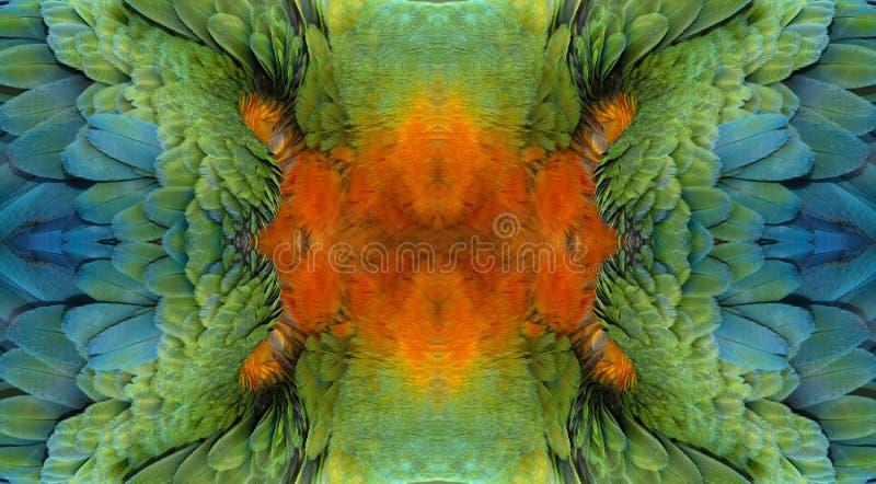 Feche acima de colorido da arara do pássaro do escarlate das penas do ` s foto de stock