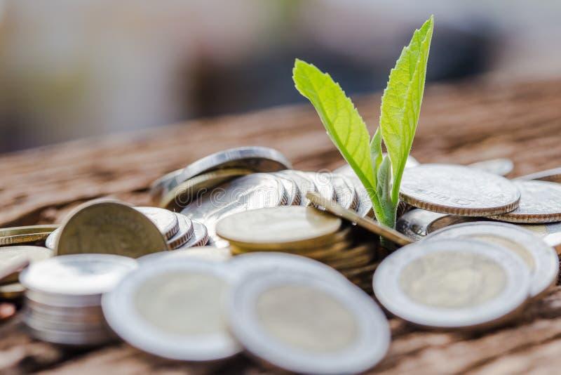 Feche acima de empilhar moedas do crescimento para lucrar a finança imagens de stock royalty free