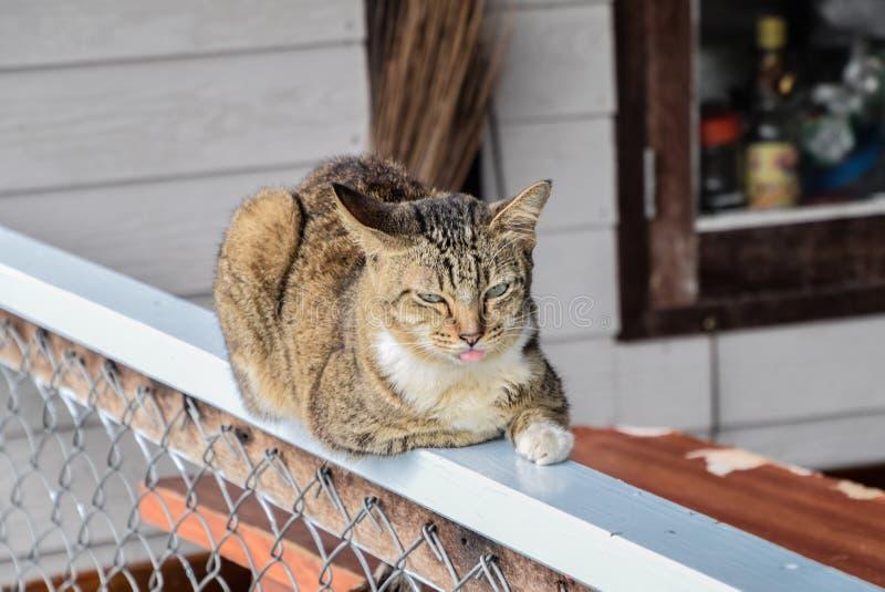 Feche acima de gato listrado que encontra-se na cerca e olhando a câmera, os gatos parecem sintomas similares à sonolência e à lí imagens de stock royalty free