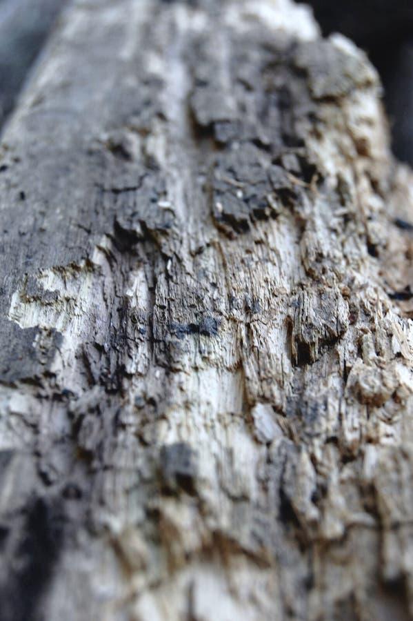 Feche acima de Textured da madeira velha fotos de stock royalty free