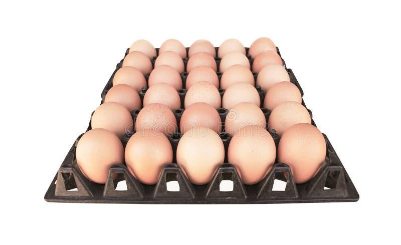 Feche acima de trinta ovos crus na bandeja plástica preta velha isolada no fundo branco com trajeto de grampeamento imagens de stock royalty free