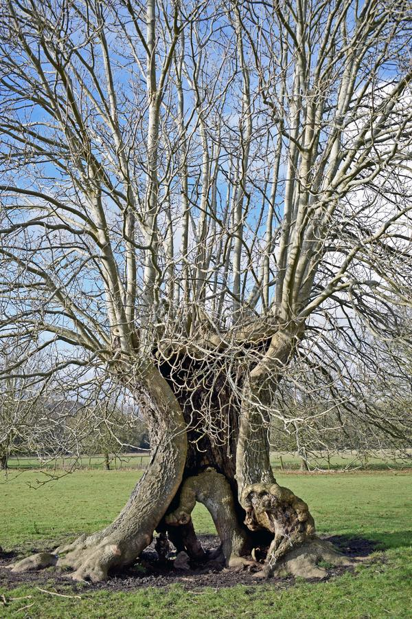 Feche acima de um caminhão incomum da árvore que olhe encantado imagens de stock royalty free