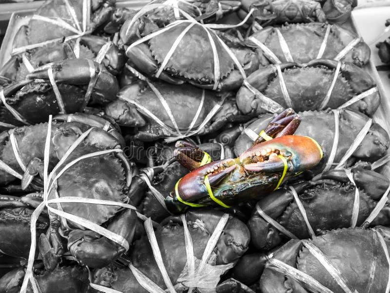 feche acima de um caranguejo do mar na caixa teve o pacote pelo fundo plástico do cinza da corda imagens de stock royalty free