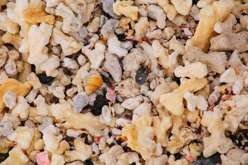 Feche acima de um coral inoperante na praia da ilha chinesa do chapéu, galão imagens de stock royalty free