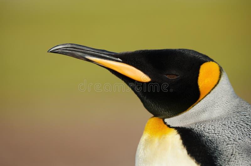 Feche acima de um pinguim de rei contra o fundo verde fotos de stock