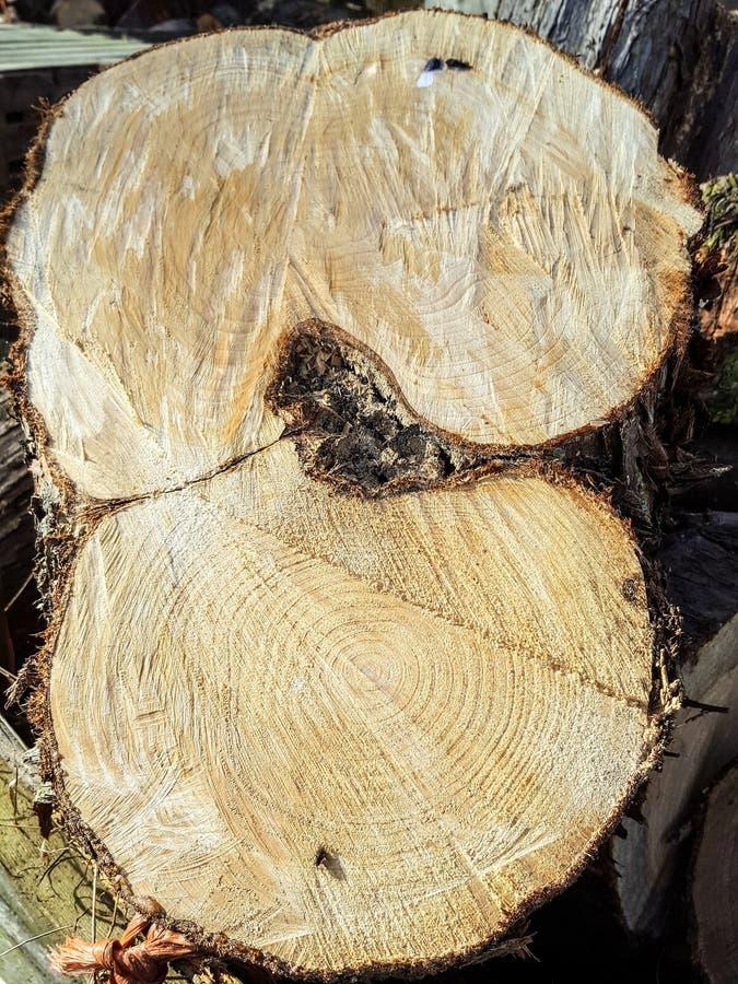 Feche acima de um tronco de árvore fotos de stock