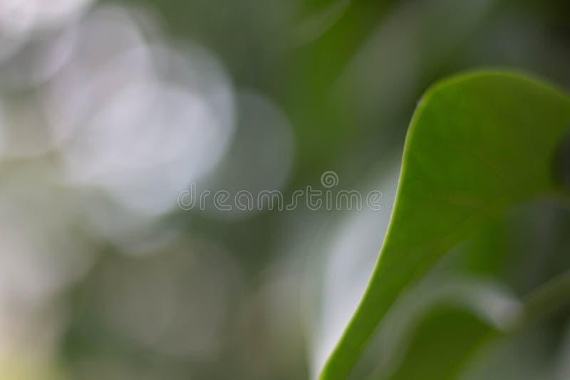 Feche acima de uma folha verde de uma árvore fotos de stock royalty free