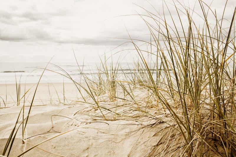 Feche acima de uma grama alta em uma praia imagens de stock royalty free