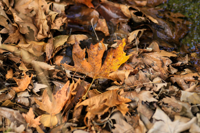 Feche acima de uma mistura das folhas de outono fotografia de stock