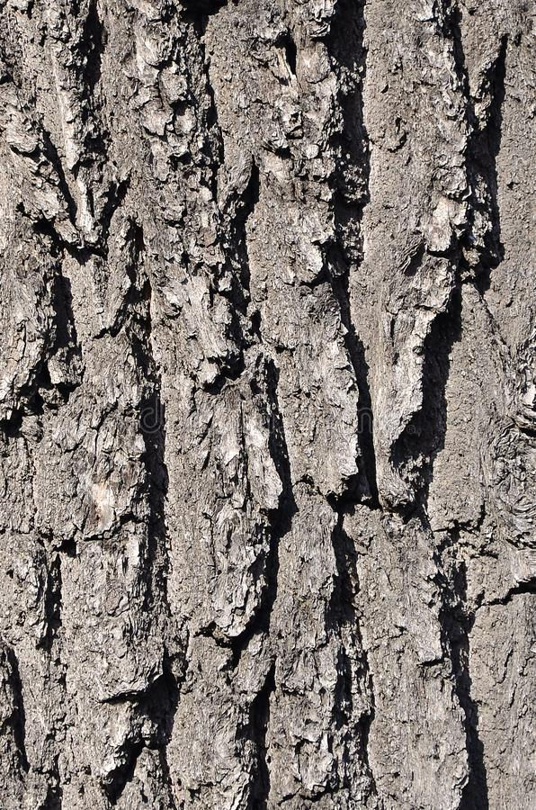 Feche acima de uma textura marrom de madeira da casca no dia exterior imagem de stock