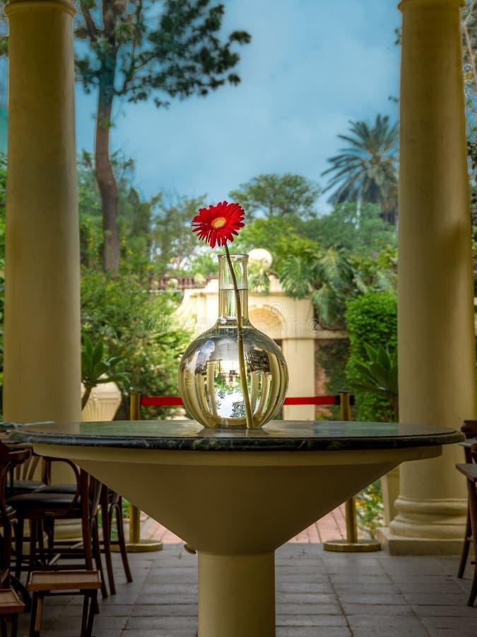 Feche acima de uma vista de uma flor vermelha em um vaso transparente no bla imagens de stock royalty free