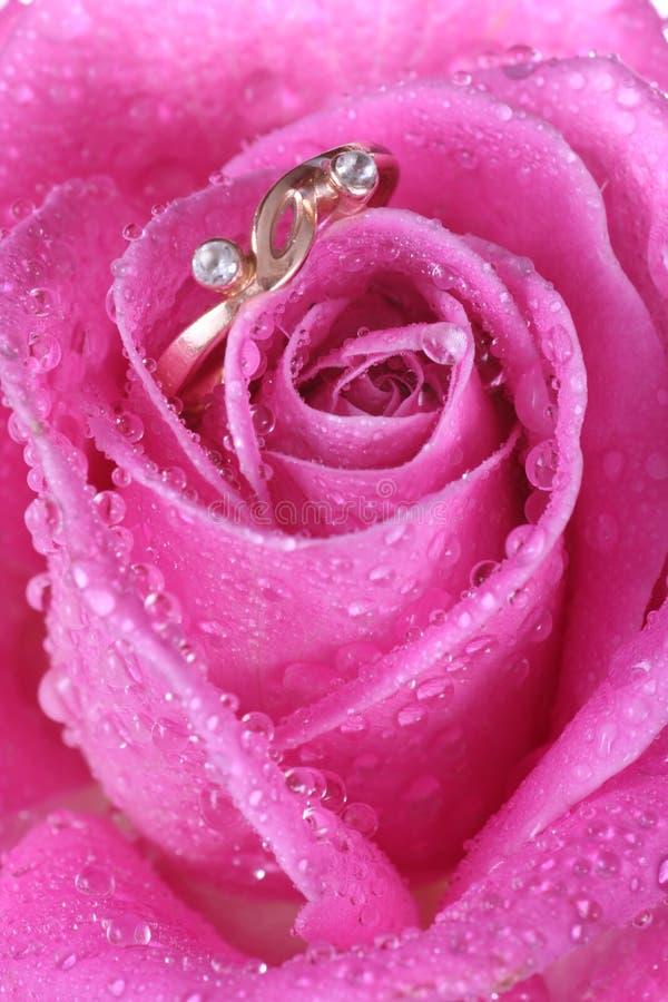 Feche acima do anel de ouro na cor-de-rosa levantou-se imagens de stock royalty free