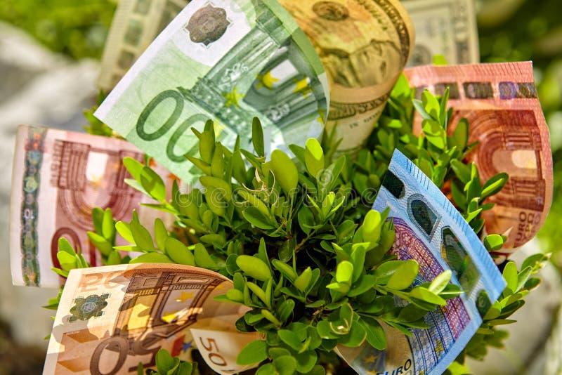 Feche acima do arbusto com contas de dinheiro fotos de stock royalty free