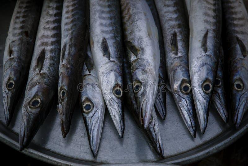 Feche acima do arranjo para a venda no mercado do alimento de mar de Indo-Pacifi imagem de stock royalty free