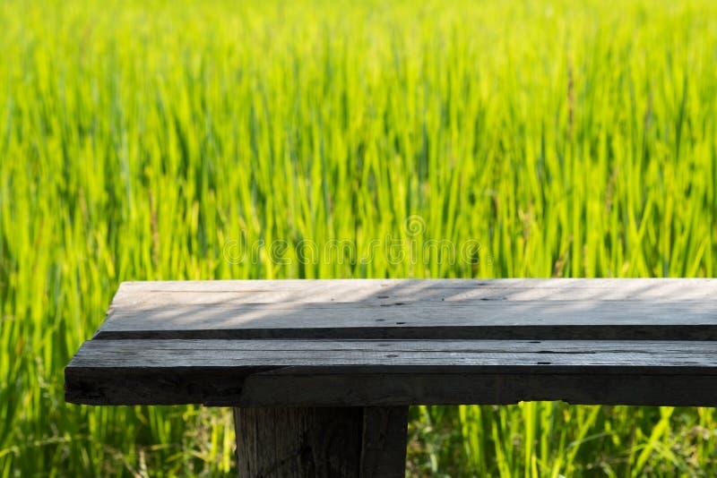 Feche acima do arroz no campo imagens de stock royalty free